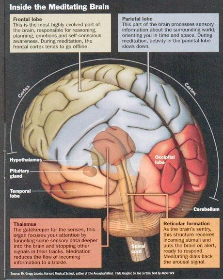 Inside the meditating brain real rest is the best source mindful muscle ccuart Gallery